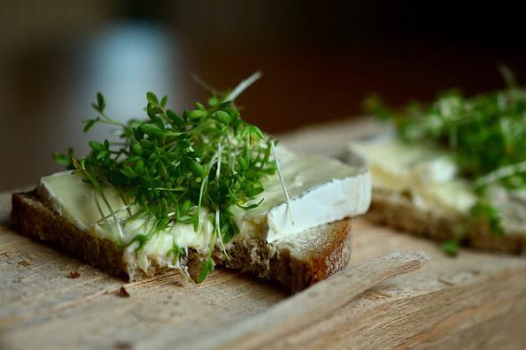 Meilleurs accords fromage de vache et pain